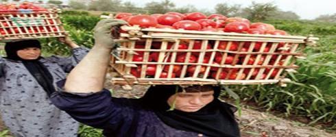 تضامن : النساء يغذين العالم وهن الأشد فقراً والأكثر تضرراً من التصحر